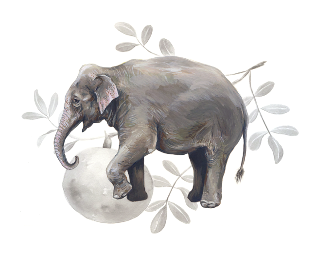 Asian elephant and <em>Feronia limonia</em>, gouache and ink