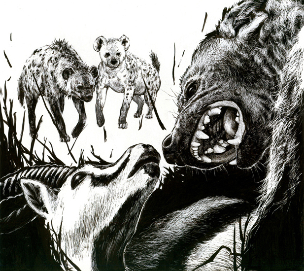 <em>Hyenas Attack</em>, ink on scratchboard, 11