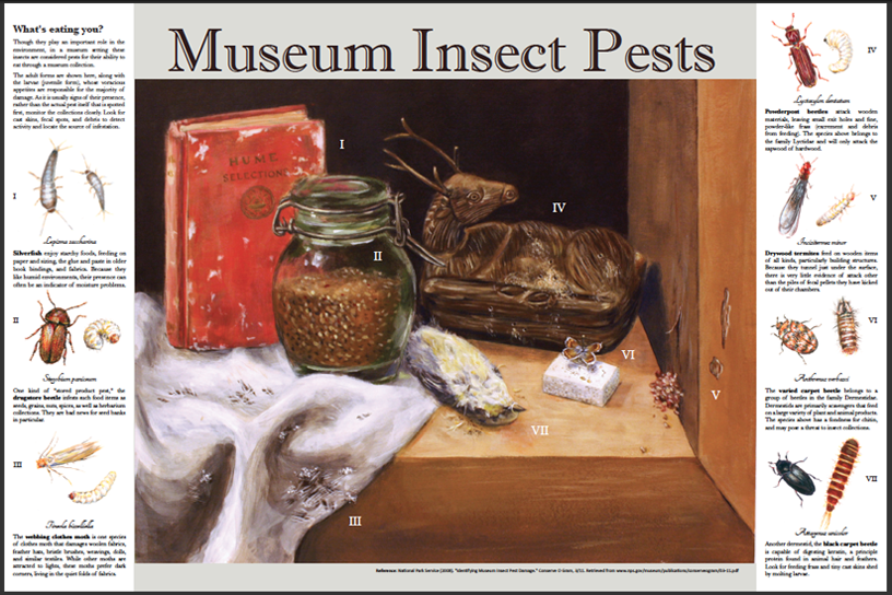 Museum Pests interpretive panel, acrylic